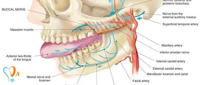 عصب کشی دندان - عکس رادیو گرافی